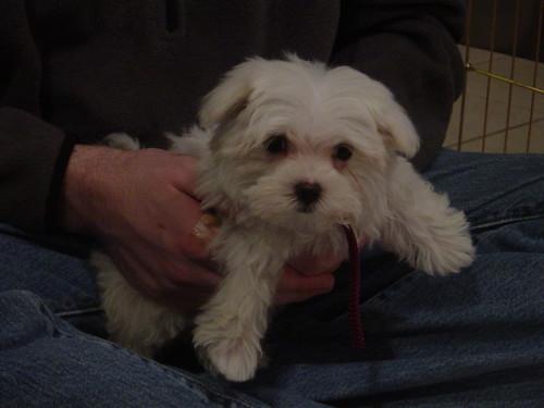 My New Puppy!