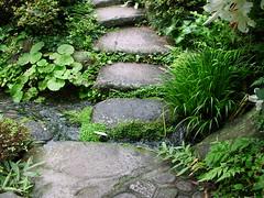 tea garden - stone pathway