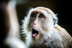 monkeys-1023