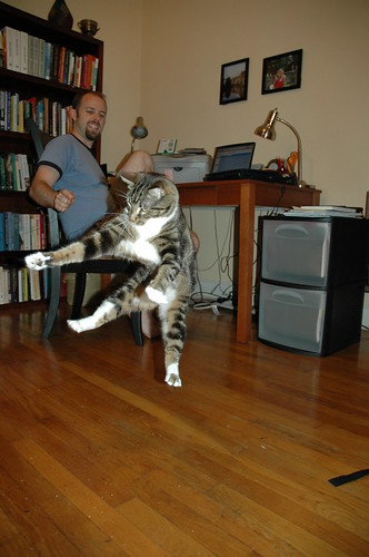 Cat Dancer Frenzy