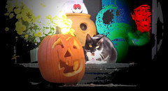 Boheme Halloween