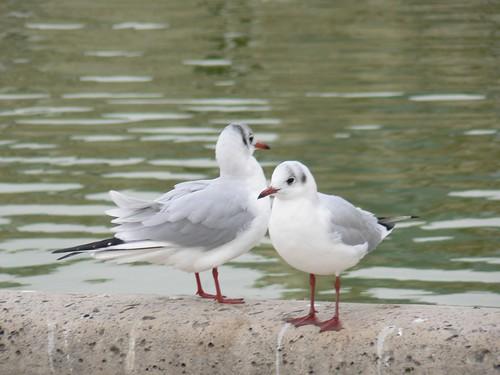 Two gulls