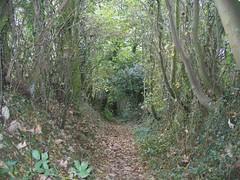 Haighton Path