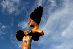 The Bird of Prey
