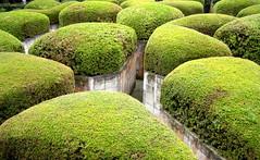 Deep Maze