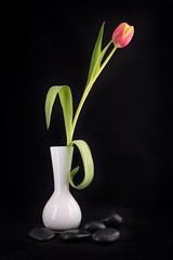 Vase with tulip and black pebbles
