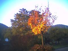 Immer noch Herbst!