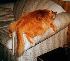 Fat Cat Pooped