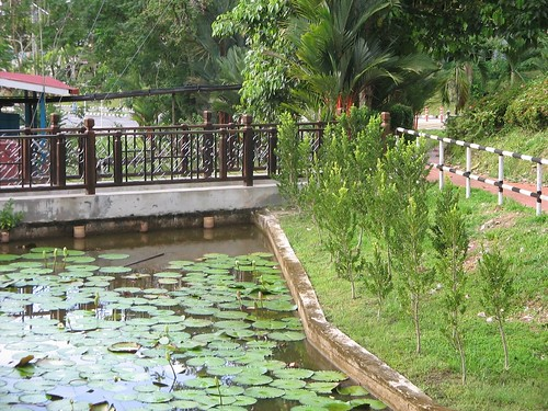 The Pond by Geminigeek.