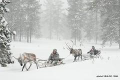 Finland, sleigh ride