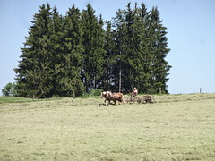 Meadow next to Wieskirche - The 2 horsepower machine