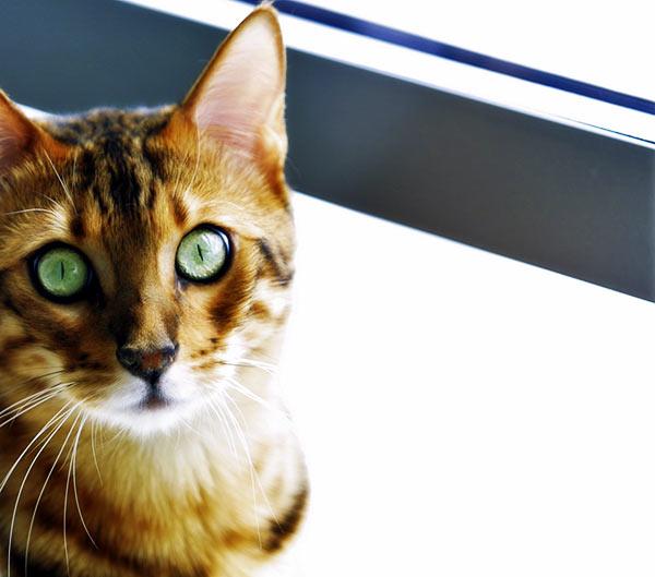 Oban - making eye contact