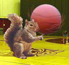 Squirrel_spinning_basketbal