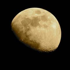 Moon Dreams