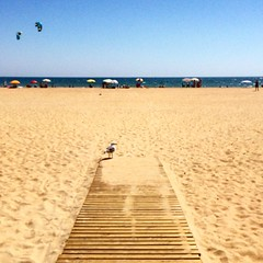 Gaviota desconfiada #playa #puntaumbria #huelva #gaviota #andalucía #españa #spain #beach #bird