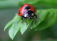 Lady bug First time in this year