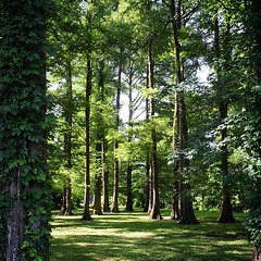 Shady spot of Rt.17 in Wilmington. #TheWorldWalk #lifeisgood #tree #nature #travel #nc #wilmington #twwphotos