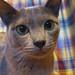 photo de chat,
