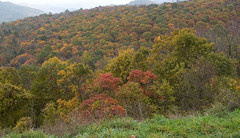 """CRW_4537: Skyline Drive Foliage • <a style=""""font-size:0.8em;"""" href=""""http://www.flickr.com/photos/54494252@N00/8705272/"""" target=""""_blank"""">View on Flickr</a>"""