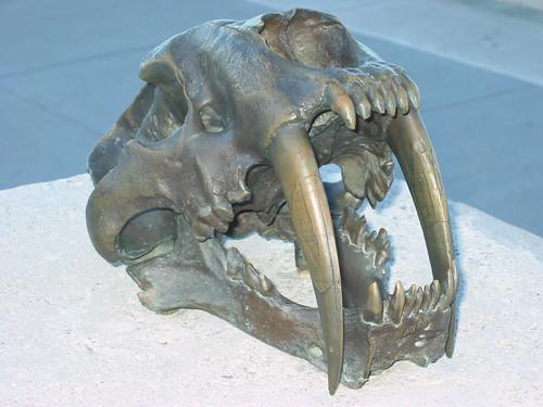 dientes de sable