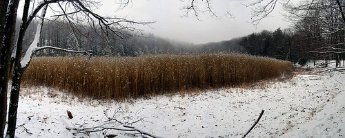 Snowy Meadow, Harriman State Park, NY