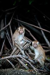 monkeys-1002