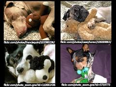 Cuddle Dogs