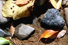 leaves, rocks and water