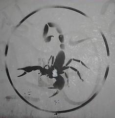 Nike black scorpion