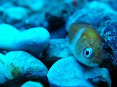 Fish in a tank... A TANK!!!