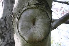 Tree Anus