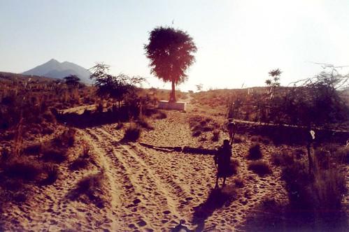 Desert herdsman (India)