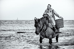 Pêcheurs de crevettes à cheval (Oostduinkerke)