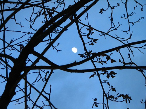The Trees Framed the Moon
