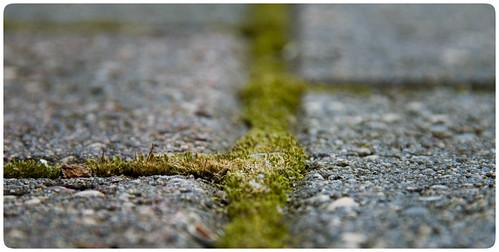 life between the cracks
