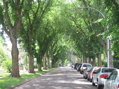 City Tree...