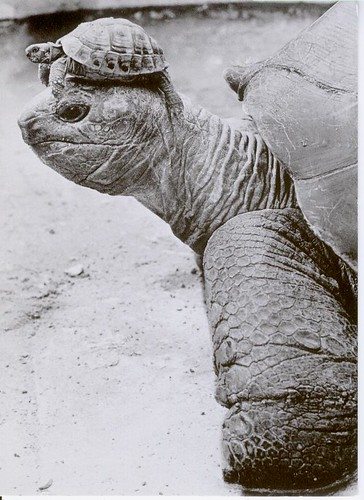 Turtle with Turtle Hat (FI-11479) on Flickr - Photo Sharing!