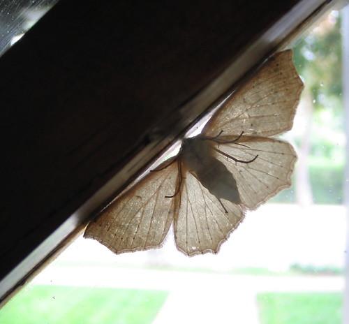 Visitor, 1