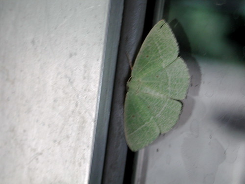 beautifulmoth.jpg