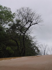 Kollibacchalu Dam -Malenadu Heavy Rain Effects Photography By Chinmaya M.Rao   (48)
