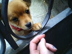 cucciolo #1