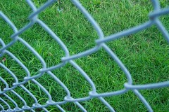 Chainlink & Grass