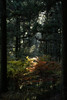 Photo:20161126 Ensyu Autumn leaves 7 By