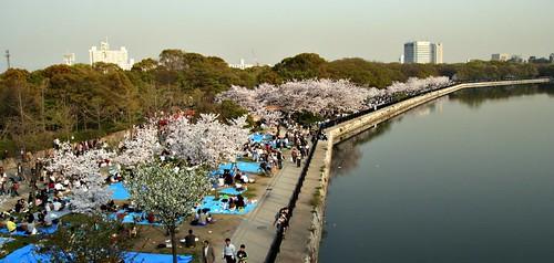 Hanami at Osaka-jo by JanneM.