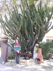 Sandy under a huge cactus