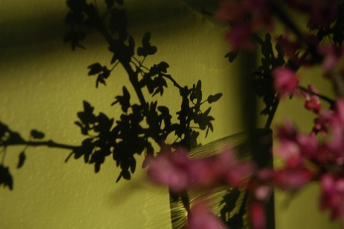 Flowers and Shadows Series