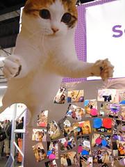 Flickr Cat