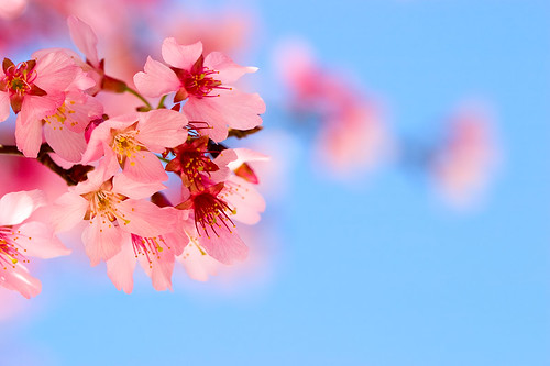 Early Spring by olvwu | 莫方