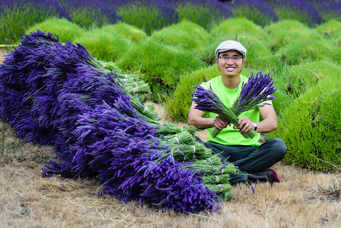 "Me in Sequim lavender fest 2015 • <a style=""font-size:0.8em;"" href=""http://www.flickr.com/photos/132142211@N05/19614315002/"" target=""_blank"">View on Flickr</a>"