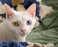 June's multi-colored eyes
